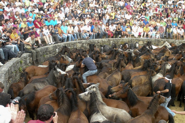 Rapa das Bestas - Round up of wild horses in Sabucedo