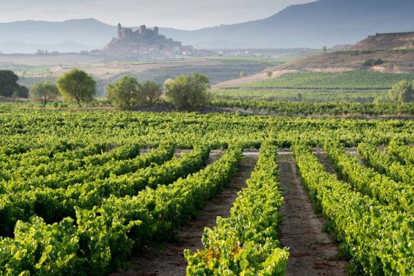 Vineyards La Rioja Alavesa