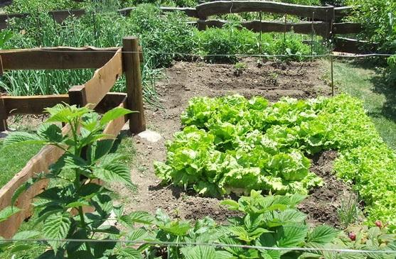 Organic vegetable patch